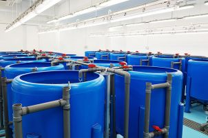 jcu aquaculture research cylindrical containers